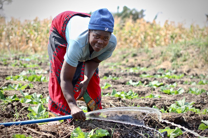 Suzana Ligomke's community in Machinga, Malawi have been provided with ten treadle pumps, irrigating five hectares of land for forty four households. Photo: Alan Whelan/Trócaire.