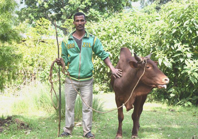Abraham Abamo and his ox