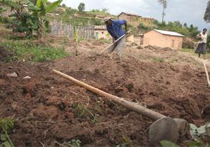farmer rwanda