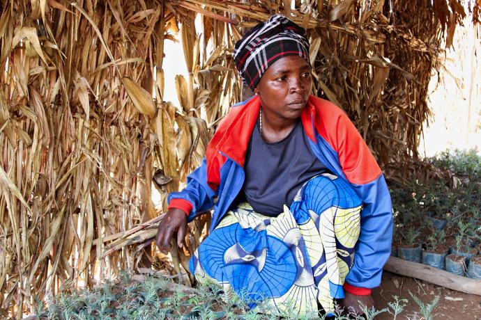 Florence Mukanzaramba works in the Mpaza village tree nursery. Photo: Alan Whelan/Trócaire.