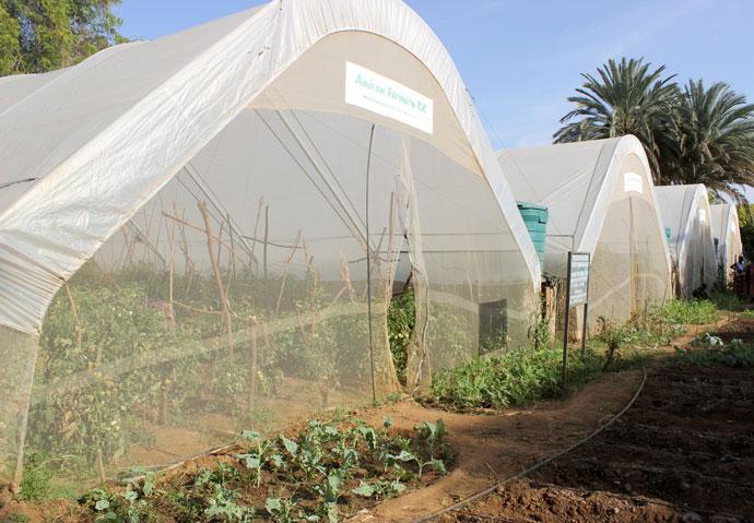 Greenhouses in Turkana