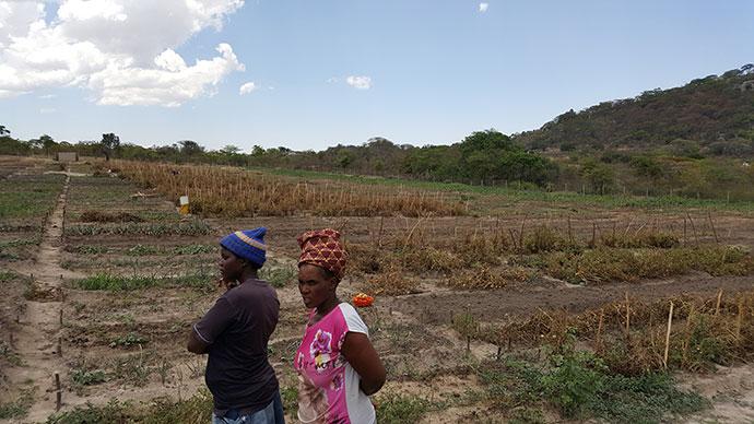 Large Garden irrigated by new water scheme, Zimbabwe