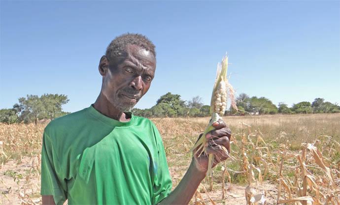 Matthew Sibanda is feeling the effect of climate change on his crop.