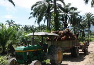 palm oil republic