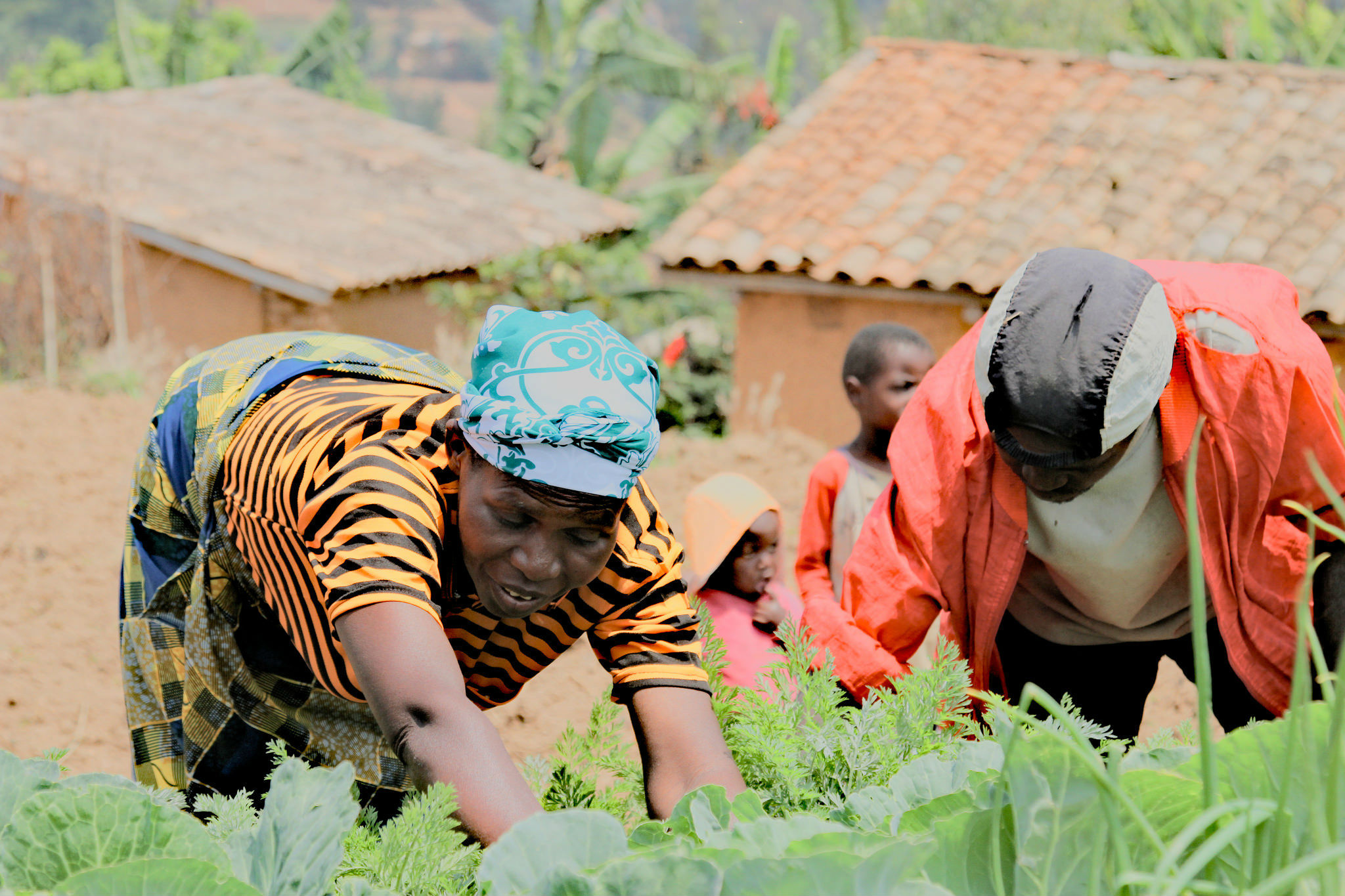 Rwanda farming
