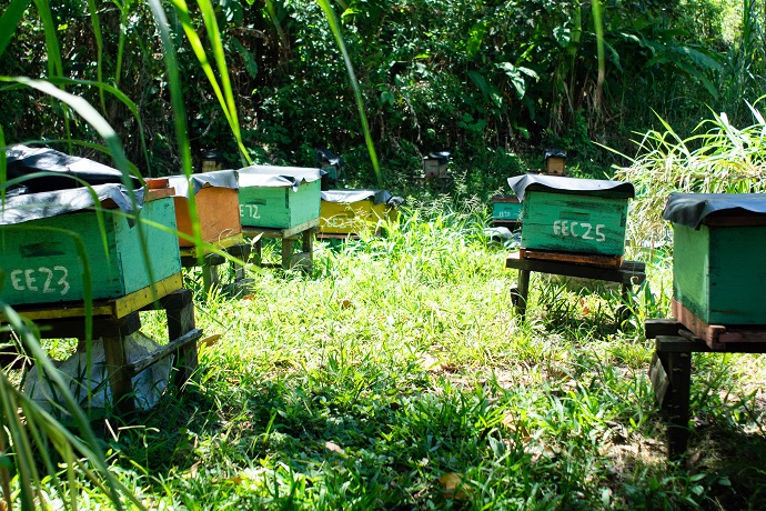 Everth and Selena have 25 boxes of common bees and 4 boxes of stingless wild bees. Photo : Giulia Vuillermoz