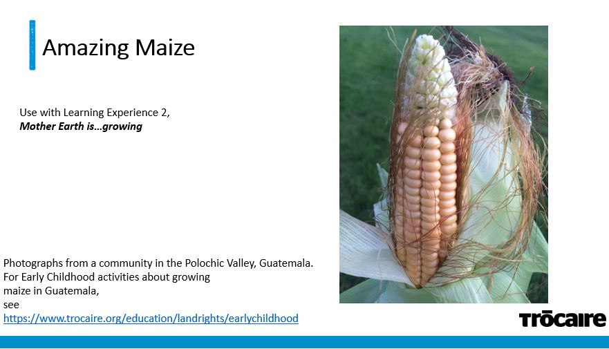 Amazing Maize – Mother Earth