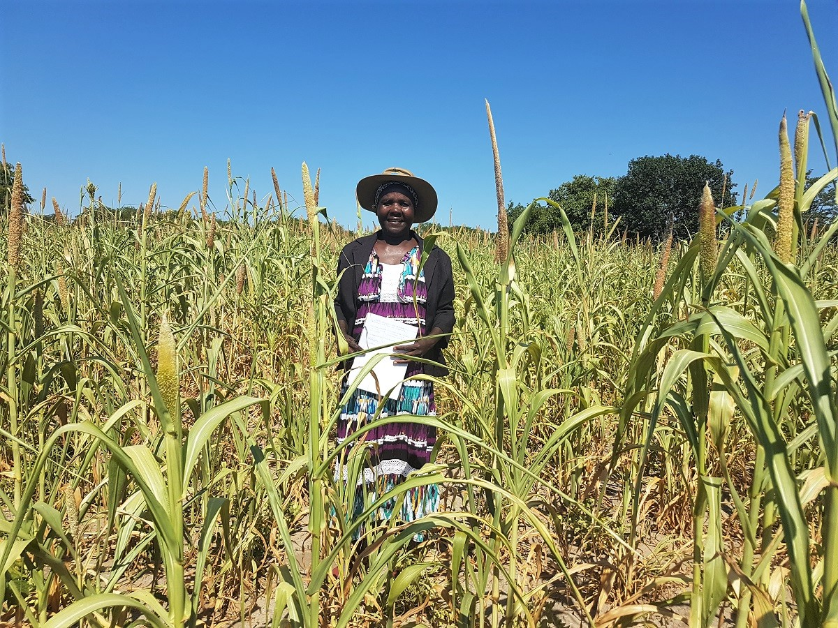 Siphiliso Sibanda of Matobo District in Zimbabwe stands in her thriving field of pearl millet. Photo: Phumla Maduma, Trócaire.