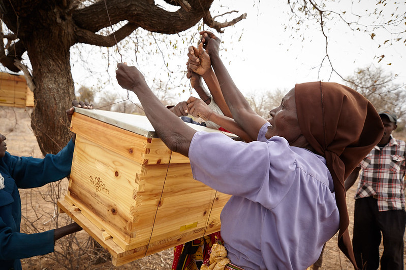Beekeeping is a sustainable activity and has the additional positive impact of pollinating crops. Photo: Aidan O'Neill.