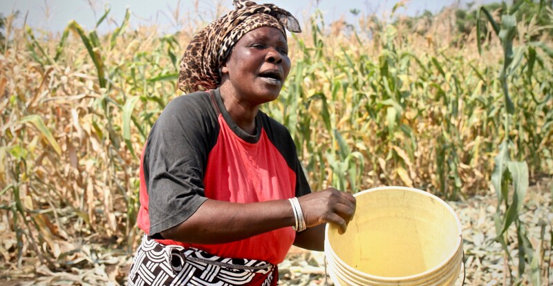 Lene Nanthabwe's community in Machinga, Malawi have been provided with ten treadle pumps which are irrigating five hectares of land for forty four households. Photo: Alan Whelan/Trócaire.